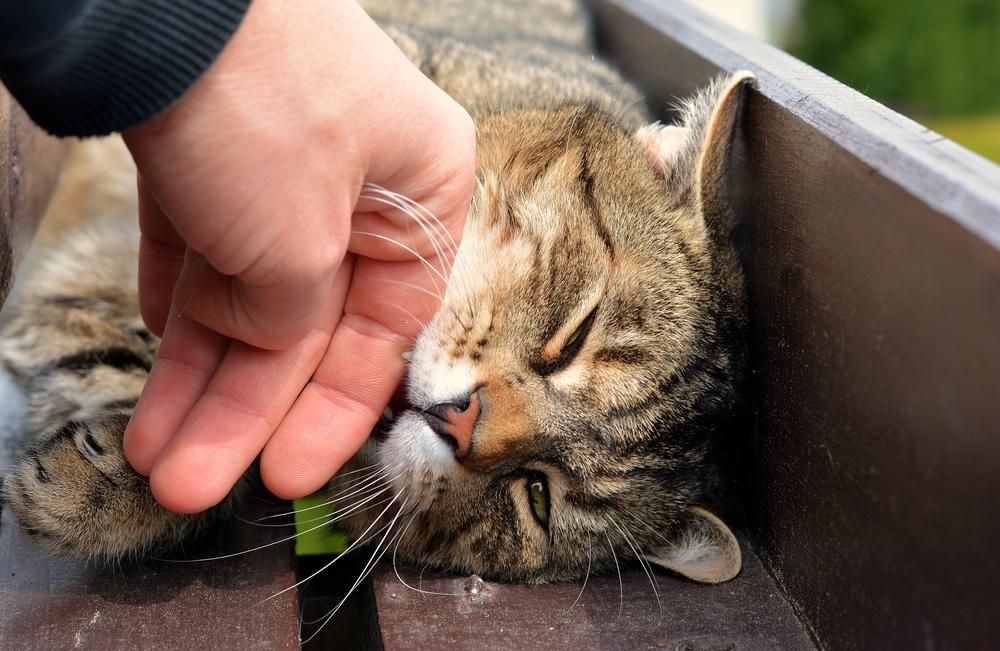 Los gatos pueden sanar el alma